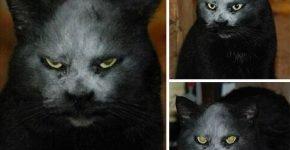Кошка-демон