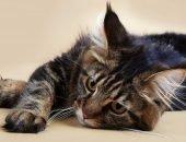 Кошка не ест и не пьёт