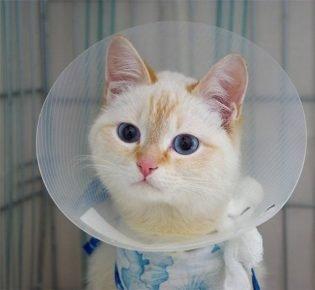 Кот в защитных приспособлениях