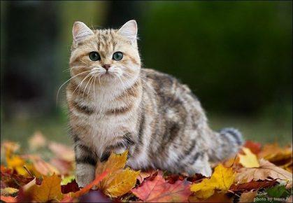 Кошка в осенних листьях