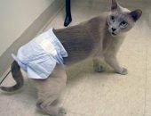 Кот в подгузнике