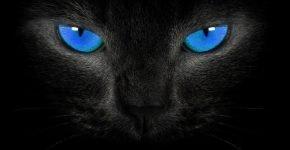 Чёрная кошка с синими глазами