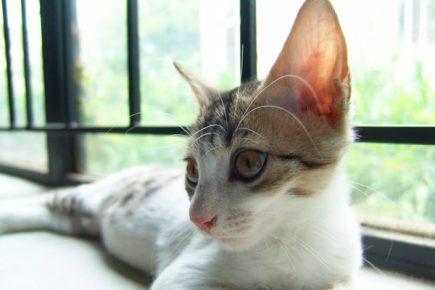 Котёнок слушает