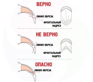 Техника стрижки кошачьих когтей