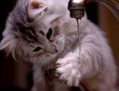 Котёнок и кран с водой