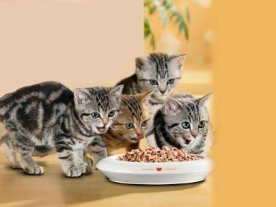 Котята и миска сухого корма