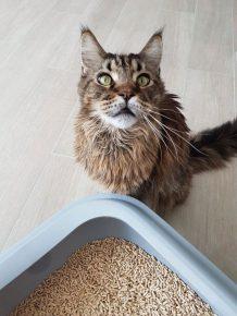 Наполнитель для длинношёрстных кошек