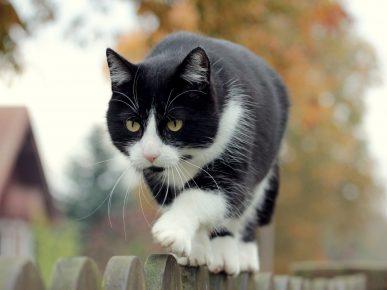 Прототип кота Феликса из рекламы