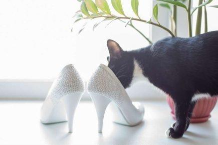 Кот и туфли