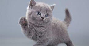 Котёнок учится ходить