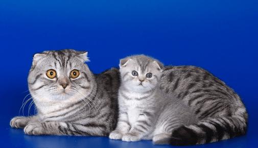 Мама с котёнком