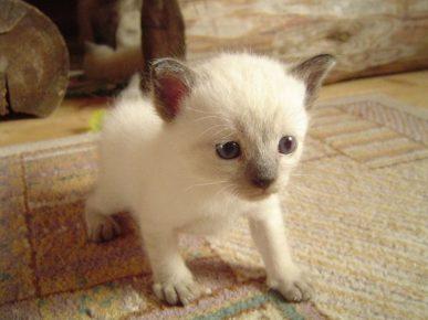 Котёнок стоит на лапках