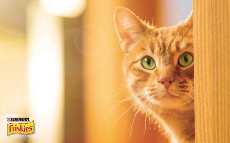 Рыжий кот из рекламы корма