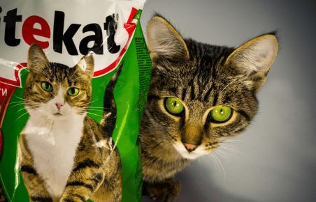 Кот Борис из рекламы корма