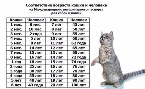 Таблица продолжительности жизни кошек в пересчёте на человеческий возраст