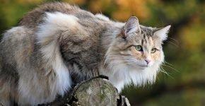 Кошка на бревне