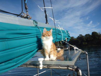 Кот-полидакт на корабле