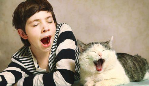 Человек и кот зевают вместе
