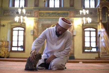 Кошка в мечети