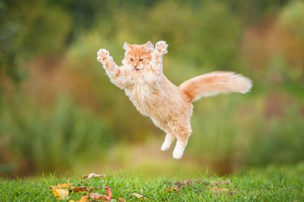 Кошка падает