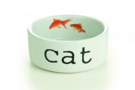 Керамическая миска для кошки