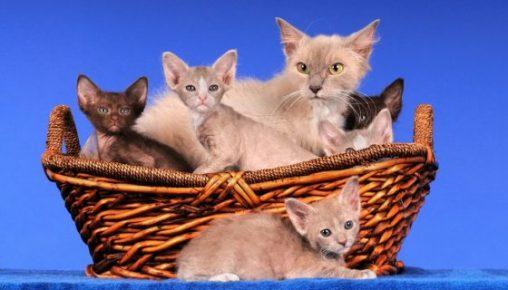 Кошка с потомством