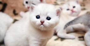 Кошка с новорождёнными котятами