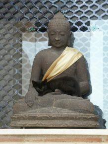 Учение о душе кошек у буддистов