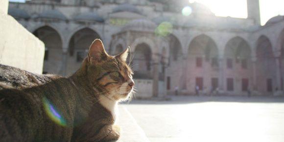 Кошка в исламской религии