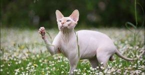 Кот на поле