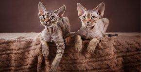 Два кота на кровати