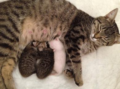Кошка и три новорождённых котёнка