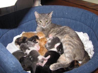 У кошки много котят