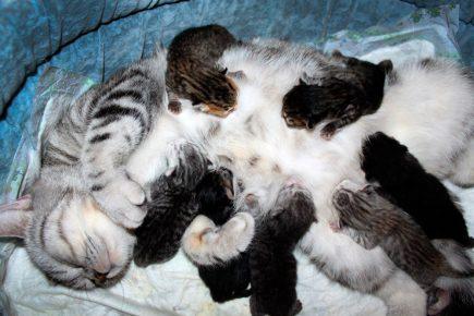 Кошка и семь котят
