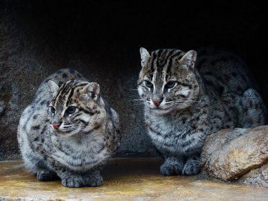Коты в пещере