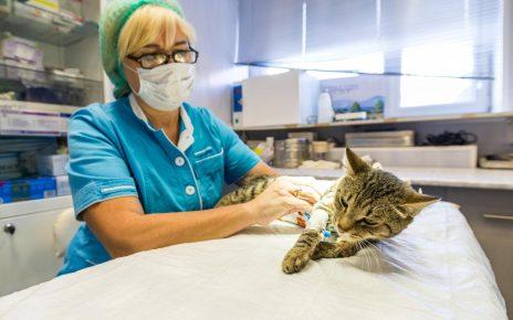 Введение кошки в медикаментозный сон