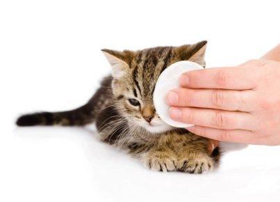 Уход за глазками кошки