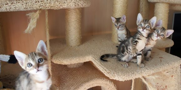 Котята сококе дома