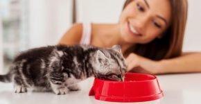 Котёнок ест из миски