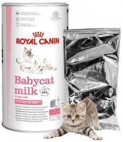 Молоко для котят