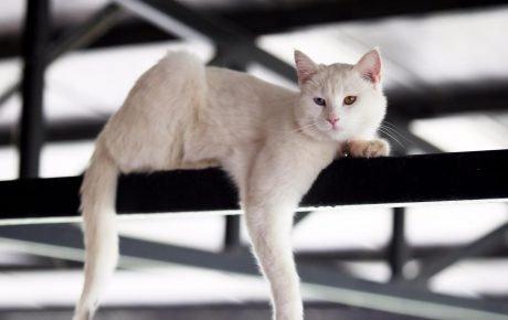 Кот на балке