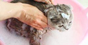 Мытье кошки с шампунем