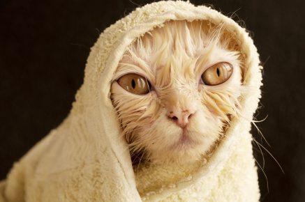 Кот после купания в полотенце