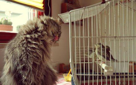 Кошка и птички в клетке