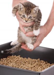 Котёнок в лотке с наполнителем