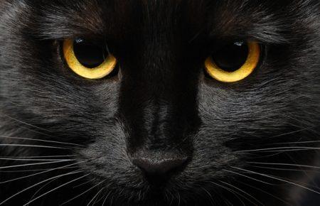 Желтоглазая чёрная кошка