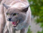 Кошка с открытой пастью