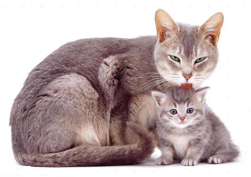Сколько раз в день должен какать кот – кошка часто ходит в туалет по большому