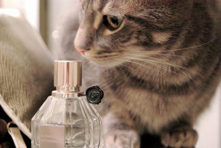 Кот и духи