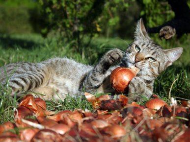 Кот и лук